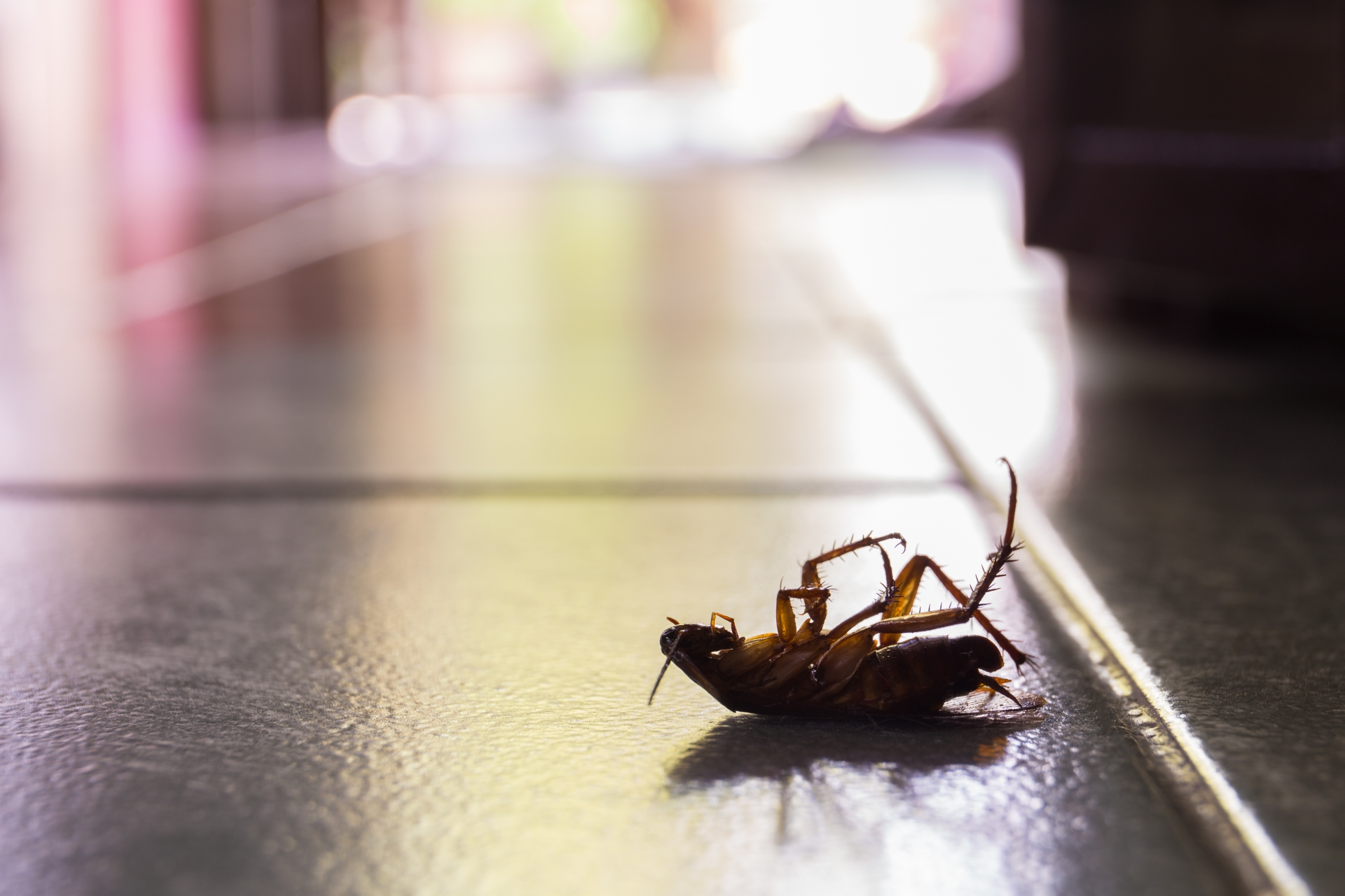 Cockroach Control, Pest Control in Peckham, Nunhead, SE15. Call Now 020 8166 9746