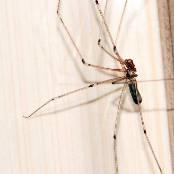 Spiders, Pest Control in Peckham, Nunhead, SE15. Call Now! 020 8166 9746